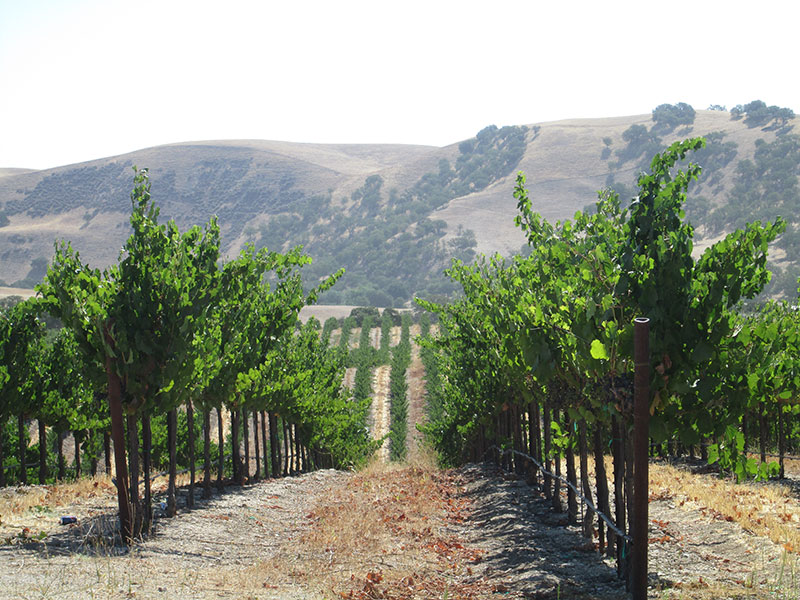 Ranchita Canyon Vineyard