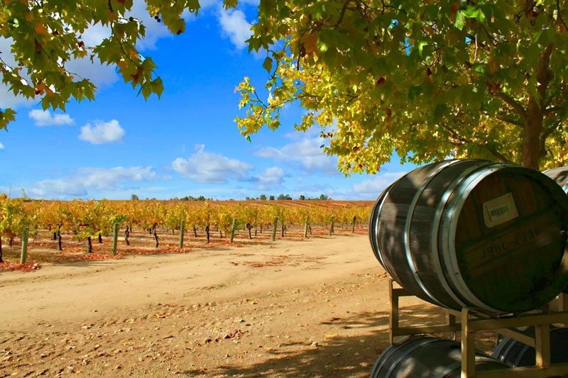 Riverstar Vineyard